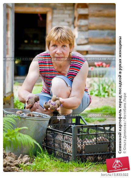 Купить «Семенной картофель перед посадкой в руках женщины», фото № 3833022, снято 22 мая 2012 г. (c) Ольга Денисова / Фотобанк Лори