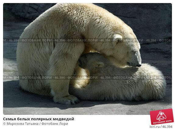 Семья белых полярных медведей, фото № 46394, снято 12 апреля 2006 г. (c) Морозова Татьяна / Фотобанк Лори