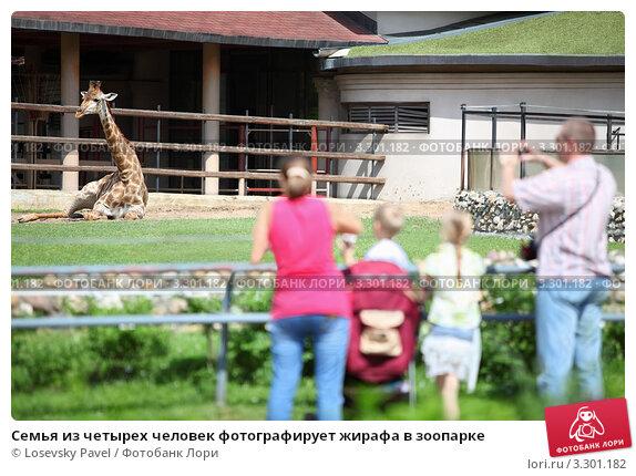 Купить «Семья из четырех человек фотографирует жирафа в зоопарке», фото № 3301182, снято 3 июня 2010 г. (c) Losevsky Pavel / Фотобанк Лори