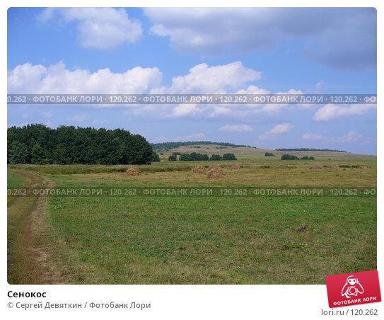 Купить «Сенокос», фото № 120262, снято 24 августа 2007 г. (c) Сергей Девяткин / Фотобанк Лори