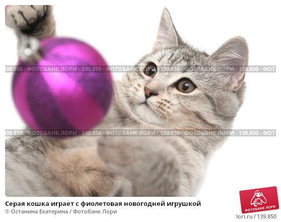 Серая кошка играет с фиолетовая новогодней игрушкой, фото № 139850, снято 26 октября 2007 г. (c) Останина Екатерина / Фотобанк Лори