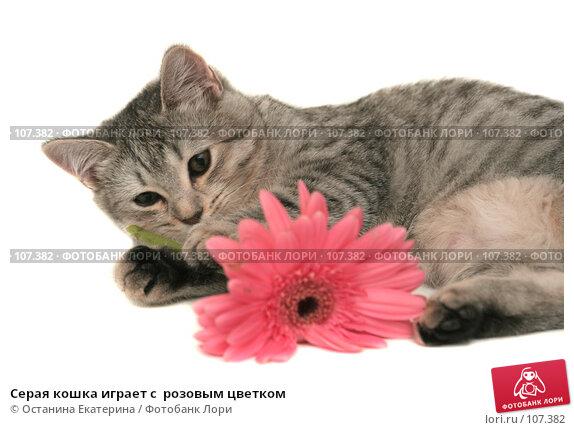 Серая кошка играет с  розовым цветком, фото № 107382, снято 16 октября 2007 г. (c) Останина Екатерина / Фотобанк Лори