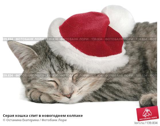 Серая кошка спит в новогоднем колпаке, фото № 139834, снято 20 ноября 2007 г. (c) Останина Екатерина / Фотобанк Лори