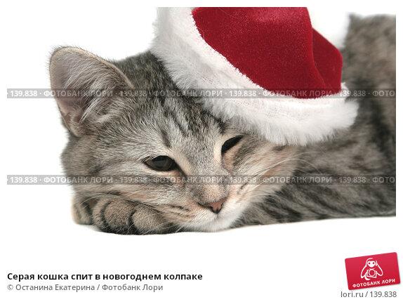 Серая кошка спит в новогоднем колпаке, фото № 139838, снято 20 ноября 2007 г. (c) Останина Екатерина / Фотобанк Лори