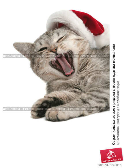 Серая кошка зевает рядом с новогодним колпаком, фото № 139818, снято 20 ноября 2007 г. (c) Останина Екатерина / Фотобанк Лори