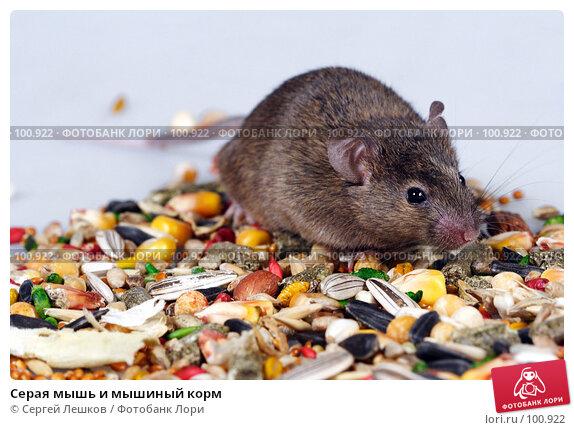 Купить «Серая мышь и мышиный корм», фото № 100922, снято 23 сентября 2007 г. (c) Сергей Лешков / Фотобанк Лори