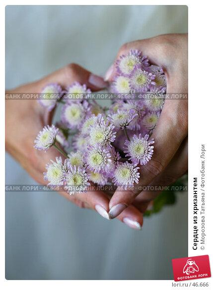 Купить «Сердце из хризантем», фото № 46666, снято 26 сентября 2006 г. (c) Морозова Татьяна / Фотобанк Лори