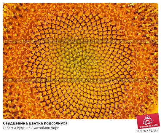Сердцевина цветка подсолнуха, фото № 59334, снято 8 июля 2007 г. (c) Елена Руденко / Фотобанк Лори