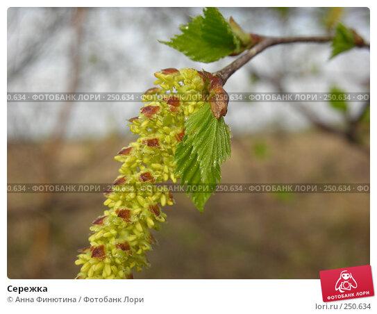 Сережка, фото № 250634, снято 12 апреля 2008 г. (c) Анна Финютина / Фотобанк Лори