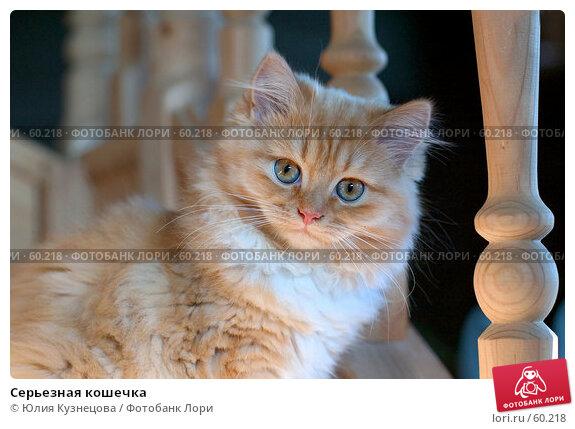 Купить «Серьезная кошечка», фото № 60218, снято 26 апреля 2018 г. (c) Юлия Кузнецова / Фотобанк Лори