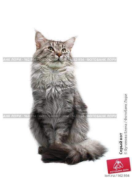 Серый кот, фото № 162934, снято 13 октября 2007 г. (c) Бутинова Елена / Фотобанк Лори