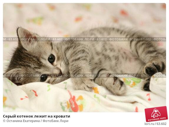 Серый котенок лежит на кровати, фото № 63602, снято 12 июля 2007 г. (c) Останина Екатерина / Фотобанк Лори