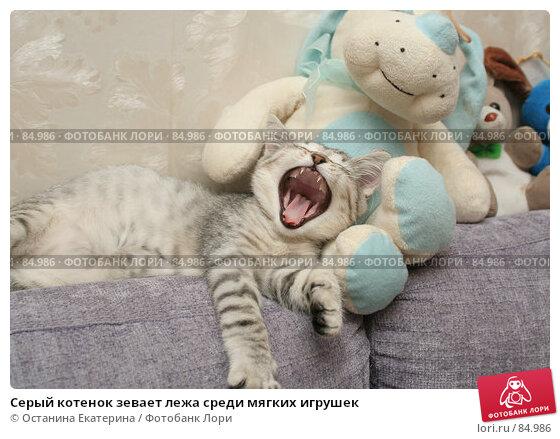 Серый котенок зевает лежа среди мягких игрушек, фото № 84986, снято 5 сентября 2007 г. (c) Останина Екатерина / Фотобанк Лори