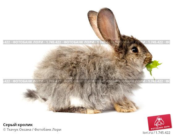 Купить «Серый кролик», фото № 1745422, снято 20 мая 2010 г. (c) Ткачук Оксана / Фотобанк Лори