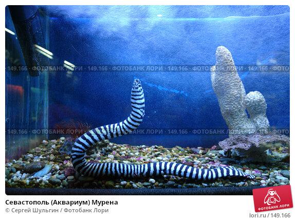 Севастополь (Аквариум) Мурена, фото № 149166, снято 1 апреля 2007 г. (c) Сергей Шульгин / Фотобанк Лори