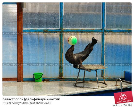 Купить «Севастополь (Дельфинарий) котик», фото № 150990, снято 1 апреля 2007 г. (c) Сергей Шульгин / Фотобанк Лори