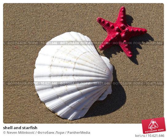 shell and starfish. Стоковое фото, фотограф Neven Milinković / PantherMedia / Фотобанк Лори