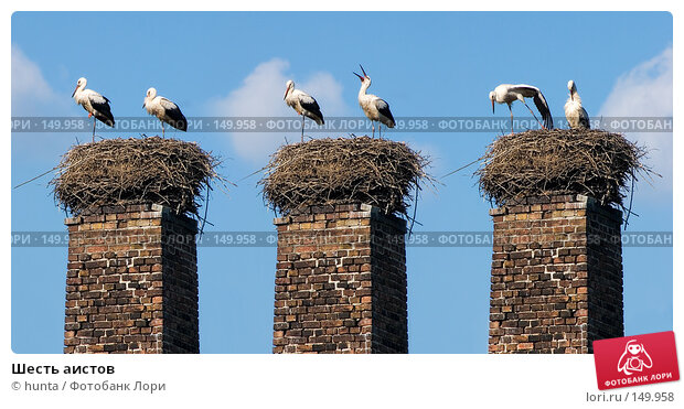 Шесть аистов, фото № 149958, снято 15 августа 2004 г. (c) hunta / Фотобанк Лори