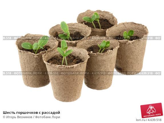 Купить «Шесть горшочков с рассадой», фото № 4639518, снято 17 мая 2013 г. (c) Игорь Веснинов / Фотобанк Лори