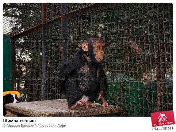 Купить «Шимпанзеныш», фото № 35958, снято 21 апреля 2007 г. (c) Михаил Баевский / Фотобанк Лори