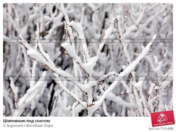 Шиповник под снегом, фото № 113698, снято 8 апреля 2007 г. (c) Argument / Фотобанк Лори