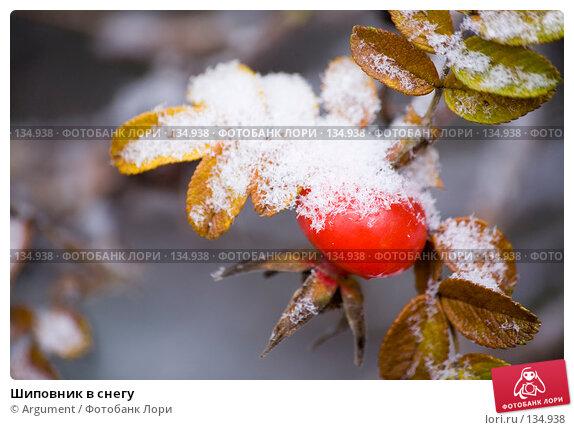Шиповник в снегу, фото № 134938, снято 2 ноября 2006 г. (c) Argument / Фотобанк Лори
