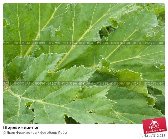 Широкие листья, фото № 312218, снято 30 мая 2008 г. (c) Яков Филимонов / Фотобанк Лори