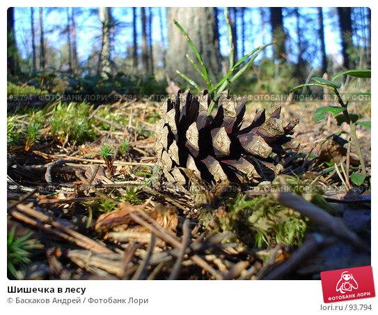 Шишечка в лесу, фото № 93794, снято 17 апреля 2005 г. (c) Баскаков Андрей / Фотобанк Лори