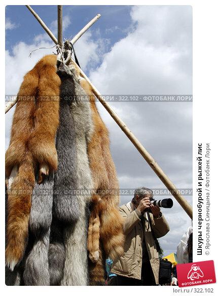 Шкуры чернобурой и рыжей лис, фото № 322102, снято 31 мая 2008 г. (c) Ярослава Синицына / Фотобанк Лори