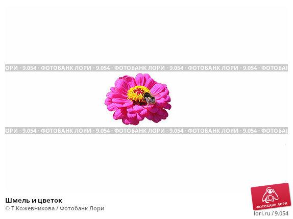 Шмель и цветок, фото № 9054, снято 21 июля 2017 г. (c) Т.Кожевникова / Фотобанк Лори