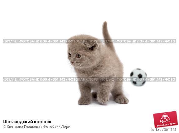 Купить «Шотландский котенок», фото № 301142, снято 12 апреля 2008 г. (c) Cветлана Гладкова / Фотобанк Лори