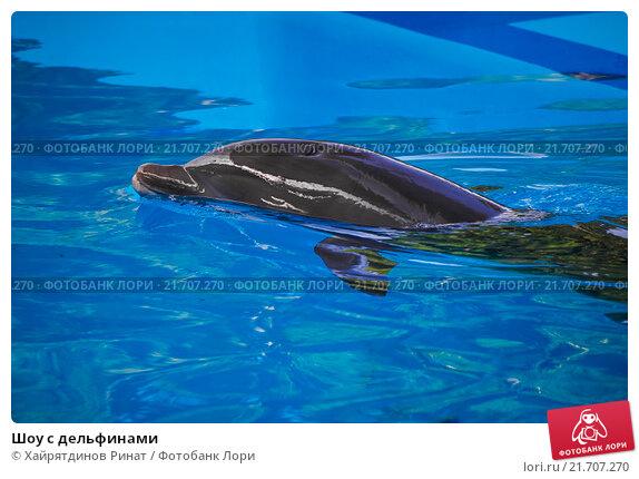Купить «Шоу с дельфинами», эксклюзивное фото № 21707270, снято 18 декабря 2013 г. (c) Хайрятдинов Ринат / Фотобанк Лори