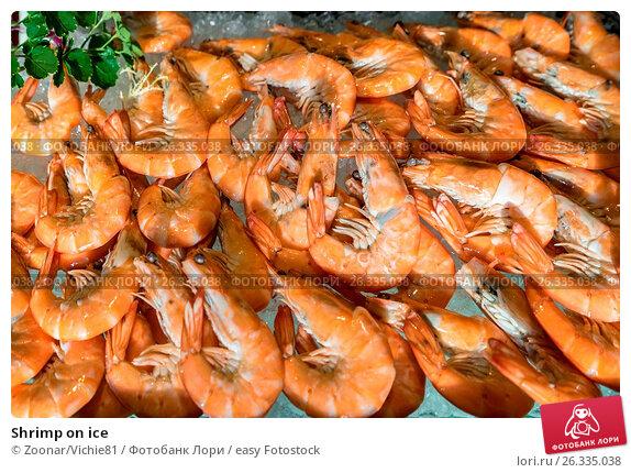 Shrimp on ice, фото № 26335038, снято 22 июня 2017 г. (c) easy Fotostock / Фотобанк Лори