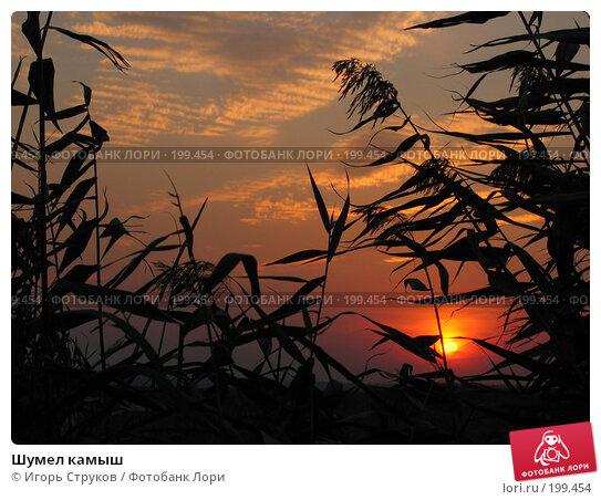 Шумел камыш, фото № 199454, снято 24 сентября 2005 г. (c) Игорь Струков / Фотобанк Лори