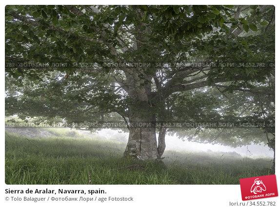 Sierra de Aralar, Navarra, spain. Стоковое фото, фотограф Tolo Balaguer / age Fotostock / Фотобанк Лори
