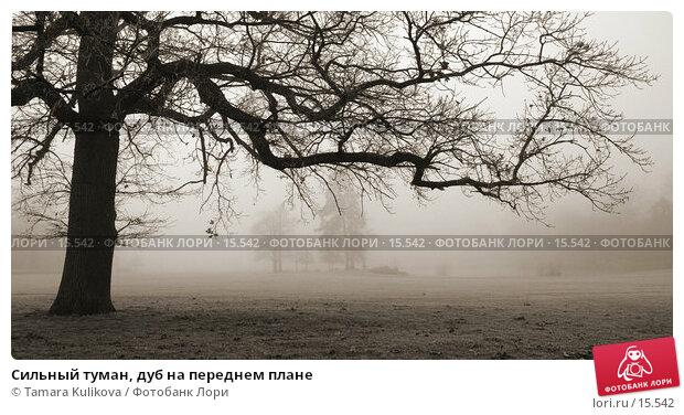 Сильный туман, дуб на переднем плане, фото № 15542, снято 19 декабря 2006 г. (c) Tamara Kulikova / Фотобанк Лори