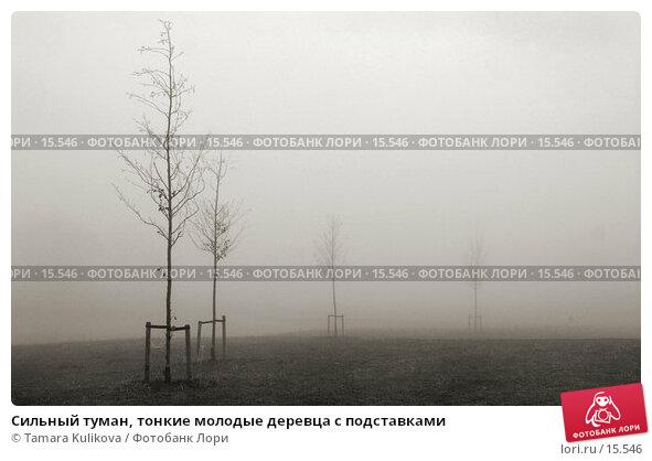 Сильный туман, тонкие молодые деревца с подставками, фото № 15546, снято 19 декабря 2006 г. (c) Tamara Kulikova / Фотобанк Лори