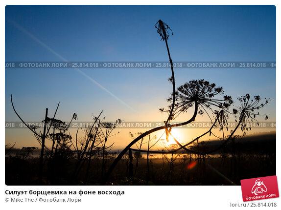 Купить «Силуэт борщевика на фоне восхода», фото № 25814018, снято 25 августа 2015 г. (c) Mike The / Фотобанк Лори