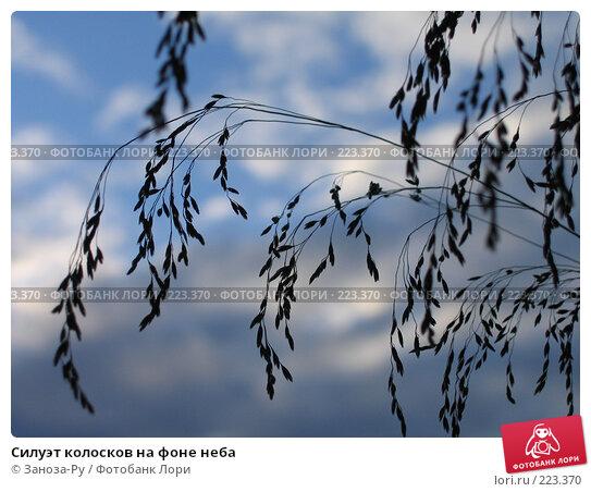 Силуэт колосков на фоне неба, фото № 223370, снято 27 июня 2007 г. (c) Заноза-Ру / Фотобанк Лори