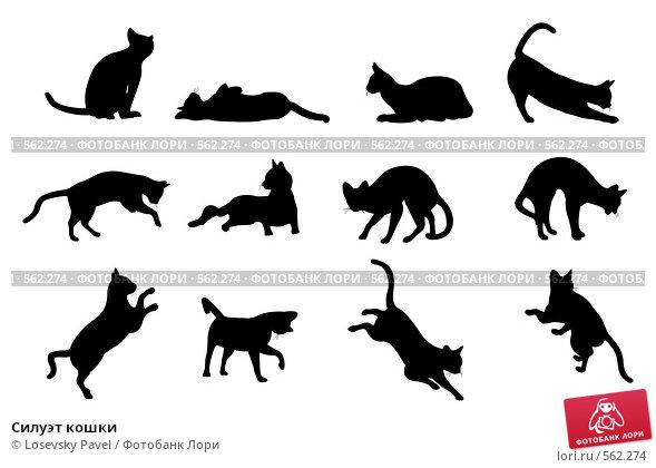 Купить «Силуэт кошки», иллюстрация № 562274 (c) Losevsky Pavel / Фотобанк Лори