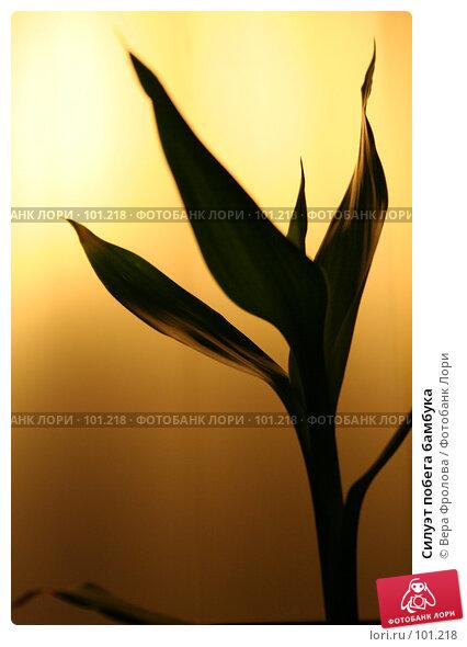 Силуэт побега бамбука, фото № 101218, снято 8 октября 2007 г. (c) Вера Фролова / Фотобанк Лори