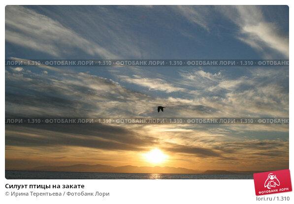 Силуэт птицы на закате, эксклюзивное фото № 1310, снято 15 сентября 2005 г. (c) Ирина Терентьева / Фотобанк Лори
