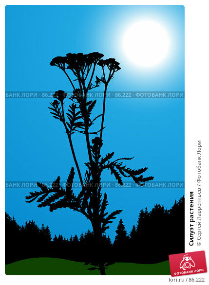 Силуэт растения, иллюстрация № 86222 (c) Сергей Лаврентьев / Фотобанк Лори