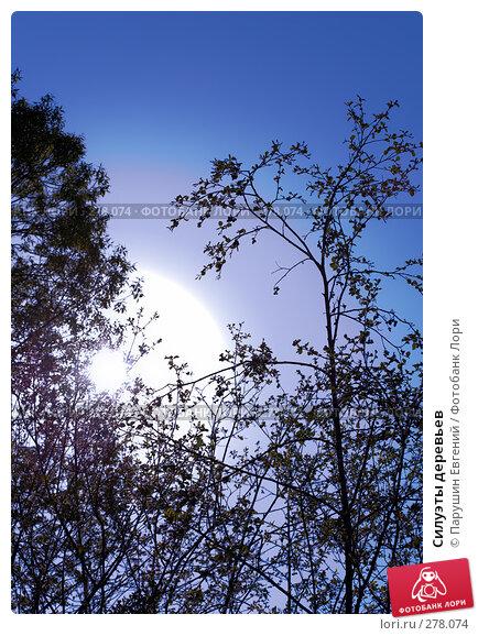 Силуэты деревьев, фото № 278074, снято 30 марта 2017 г. (c) Парушин Евгений / Фотобанк Лори