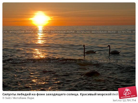 Силуэты лебедей на фоне заходящего солнца. Красивый морской пейзаж. Стоковое фото, фотограф Svet / Фотобанк Лори