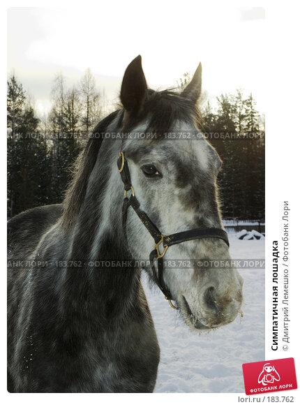 Симпатичная лошадка, фото № 183762, снято 19 января 2008 г. (c) Дмитрий Лемешко / Фотобанк Лори