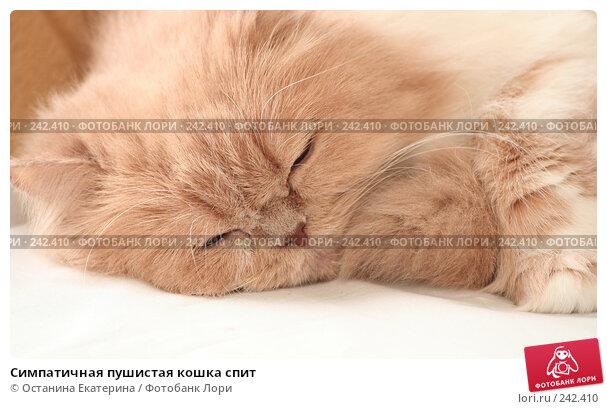 Симпатичная пушистая кошка спит, фото № 242410, снято 19 марта 2008 г. (c) Останина Екатерина / Фотобанк Лори