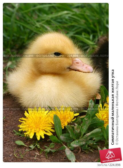 Симпатичный маленькая желтая утка, фото № 224898, снято 26 мая 2007 г. (c) Останина Екатерина / Фотобанк Лори