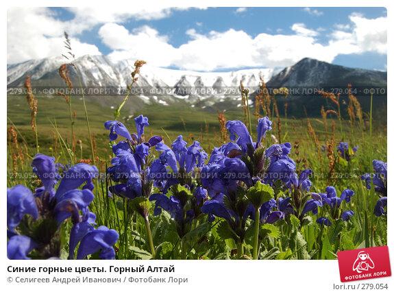 Синие горные цветы. Горный Алтай, фото № 279054, снято 8 июля 2006 г. (c) Селигеев Андрей Иванович / Фотобанк Лори