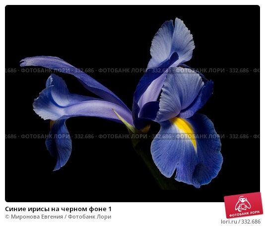 Синие ирисы на черном фоне 1, фото № 332686, снято 24 октября 2016 г. (c) Миронова Евгения / Фотобанк Лори